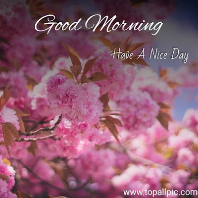 good morning images with flower photo