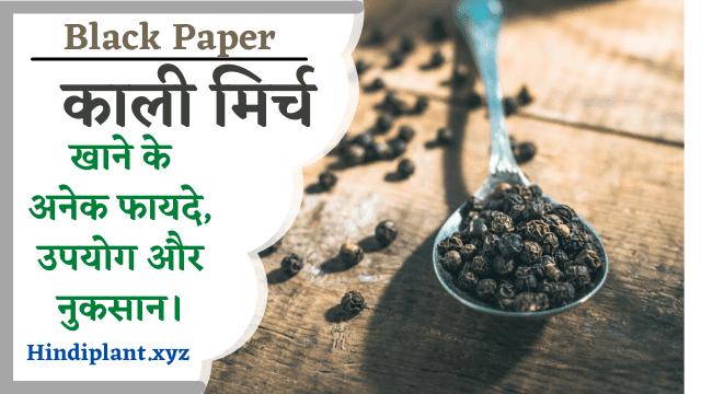 Black Paper:काली मिर्च खाने के अनेक फायदे, उपयोग और नुकसान।