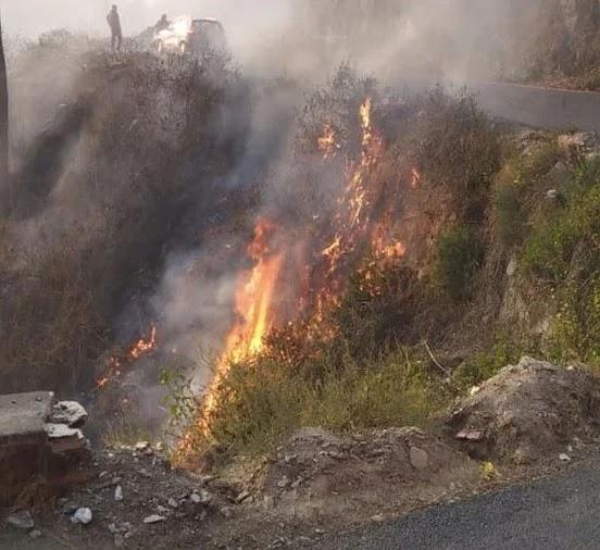 अल्मोड़ा के पांडेखोला से सटे जंगल में लगी आग।