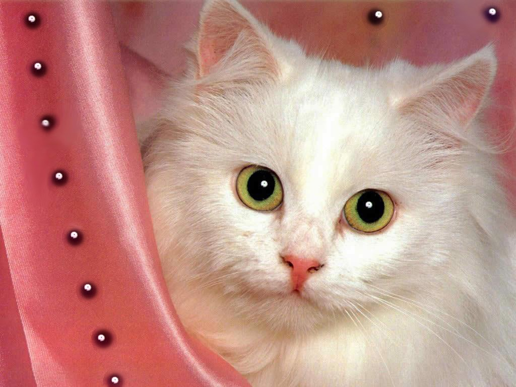 Ali 3d Name Wallpaper Free Download Cute Cat Hd Wallpapers Free Download Unique Wallpapers