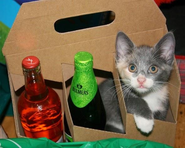 Fotografia de gatito con complejo de botella
