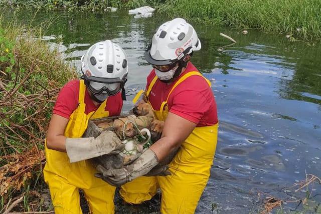 Bombeiros do 9ºGBM resgatam sete filhotes de cachorro de área alagada
