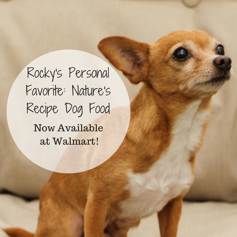 You know I love to talk about pets, especially since I have 4 Chihuahuas of my own. Well, today Rocky is the star of the show because I'm going to tell you ...