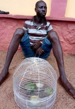 Man Stabs Brother To Death For Bringing Birds To Their Home