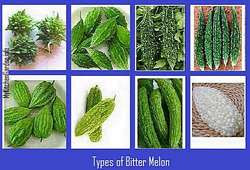 Types of Bitter Melons - Indian, Chinese, short, long, white, green