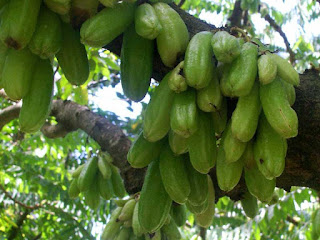 bilimbi fruit images