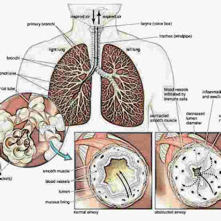 श्वसन क्या है परिभाषा