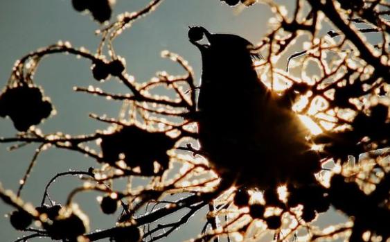 """ولاية منيسوتا الأمريكية،  تحذر المواطنين من """"الطيور في حالة سكر""""."""