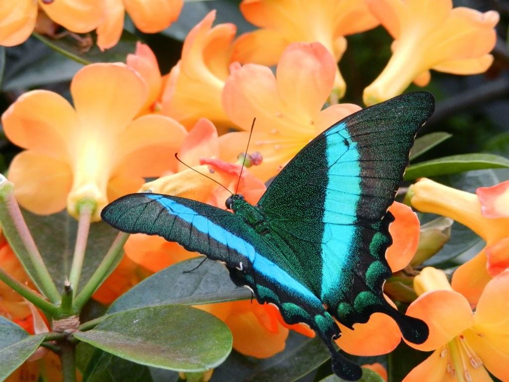 Papillons en liberté Jardin Botanique Montréal