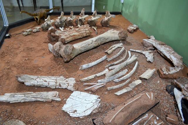 Fósseis do Arrudatitan maximus estão expostos no Museu de Paleontologia de Monte Alto (SP)