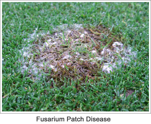 Lawn Disease ~ Lawn and Turf Care