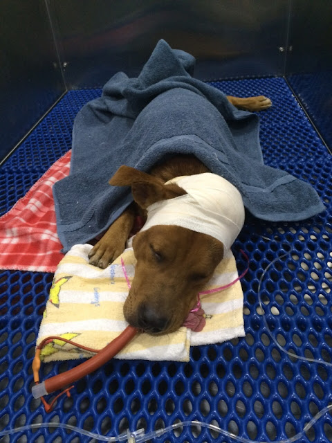 HOPE Dog Rescue: News From The Vacated Factory (2