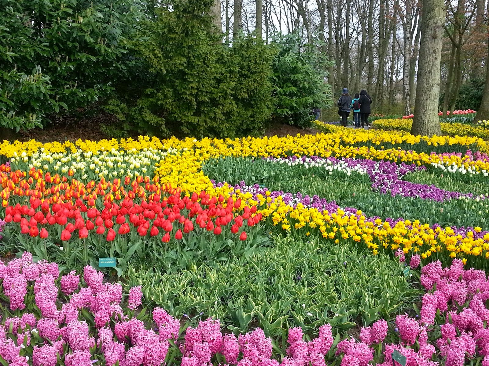 ...Keukenhof, with more than 7 millions ....