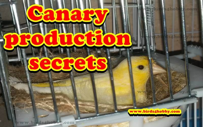 Canary production secrets