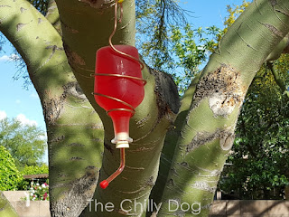 DIY a hummingbird feeder with recycled glass bottles and wire from the hardware store.