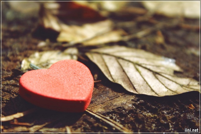 ảnh trái tim và chiếc lá khô
