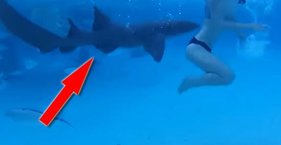 Ele filmou sua esposa sendo atacada por tubarão em sua Lua de Mel - Capa
