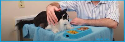 memberikan makanan kucing yang sehat