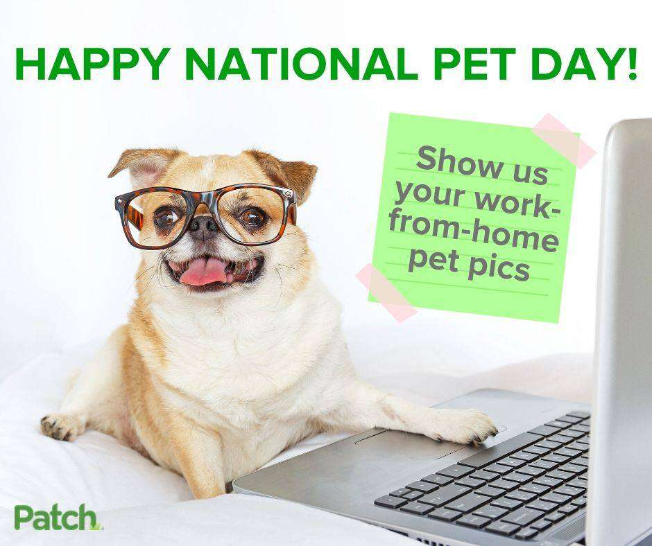National Pet Day Wishes Sweet Images