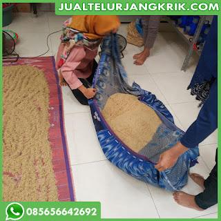 Jual Telur Jangkrik Jawa Timur