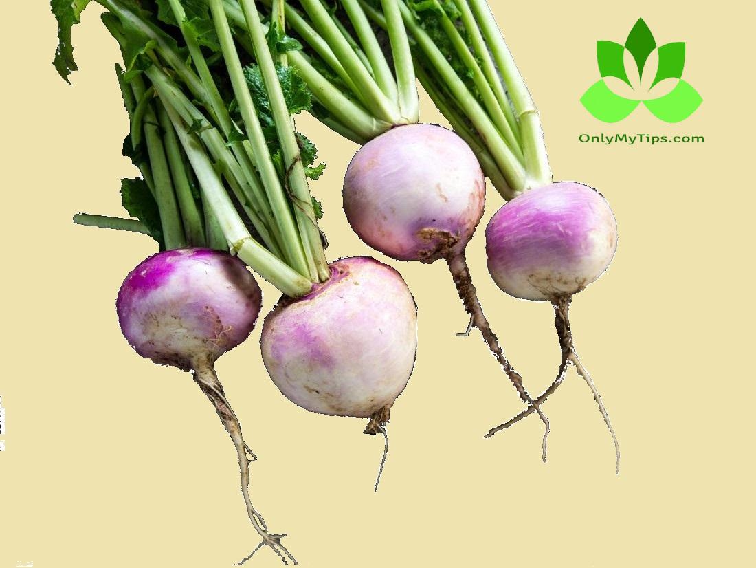 शलजम - Turnip
