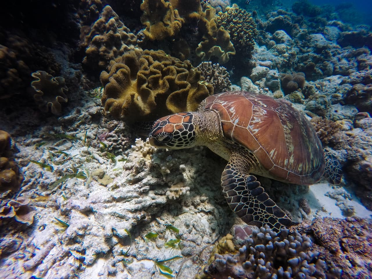 aprende ingles partes animales tortuga marina arrecife