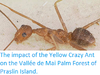 http://sciencythoughts.blogspot.co.uk/2014/11/the-impact-of-yellow-crazy-ant-on.html