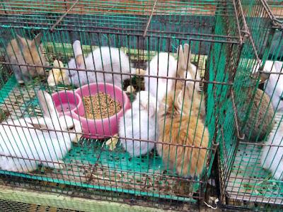 Travel Malang Banyuwangi, Splindit, 0821-316-7070-8, Travel Banyuwangi Malang