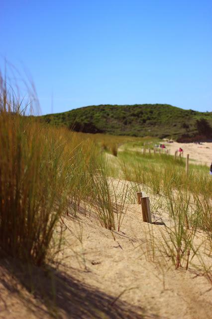 Les dunes de  la plage des Chevrets