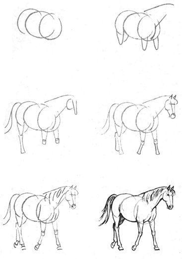Corso di grafica e disegno per imparare a disegnare for Disegno cavallo per bambini