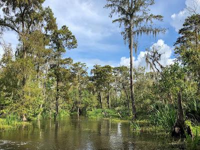 Beautiful Louisiana Bayou