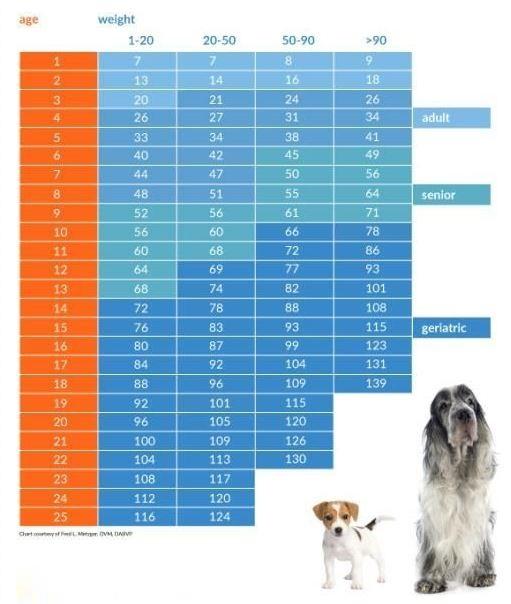 Возраст собаки в человеческих годах