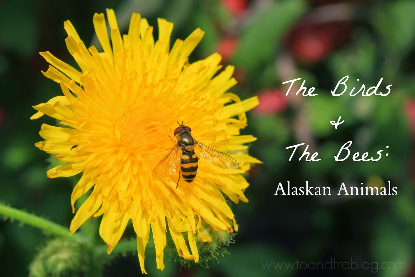 The Birds & the Bees: Alaskan Animals