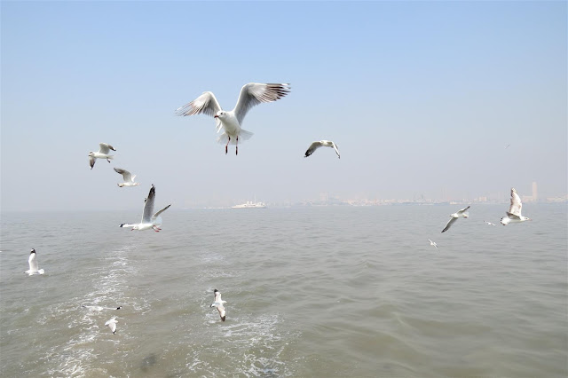 Sea Gulls following the ferry