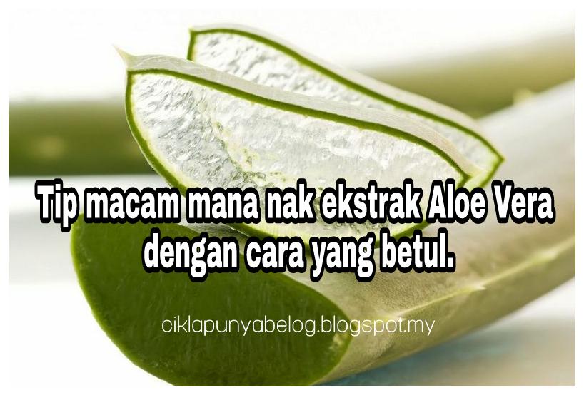 Tip macam mana nak ekstrak Aloe Vera dengan cara yang betul.