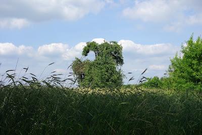 Mazowieckie krajobrazy