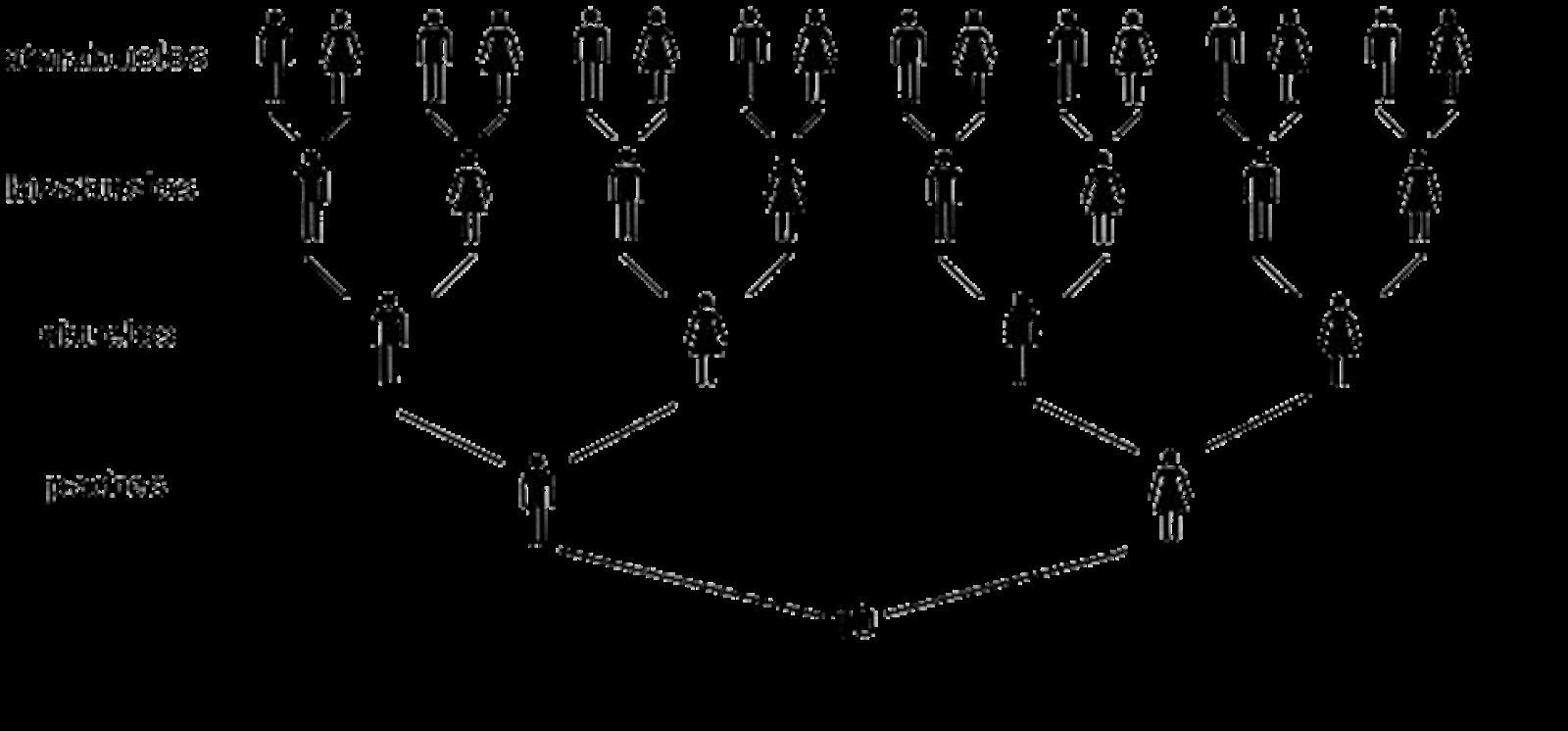 Los acevedo genealog a for Como se desarrolla un arbol