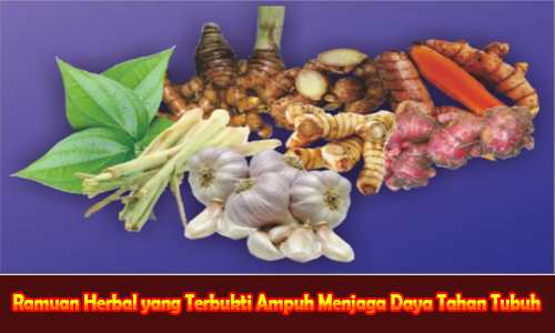 Ramuan Herbal yang Terbukti Ampuh Menjaga Daya Tahan Tubuh