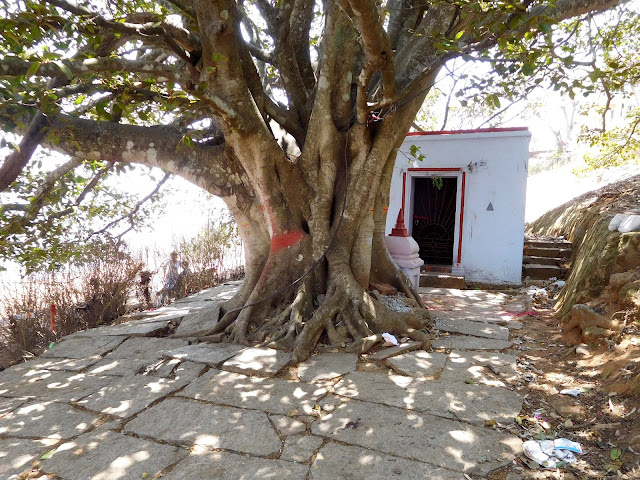An old Banyan tree with a small local shrine, on top of Nandi Hills