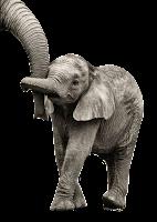 Elefante baby em png