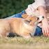 Why Do Dogs Bite, Protect Yourself And Your Family From Dog Biting, 10  Useful Tips Every Dog Owner Should Know