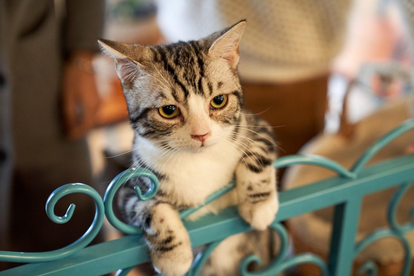 Cara Menghitung Umur Kucing, Hewan Kesayangan Rasulullah SAW