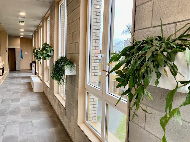 hangplanten scandens brasil en planten kopen huren vr bedrijf event feest party beurs tegen muur aan plafond in pot