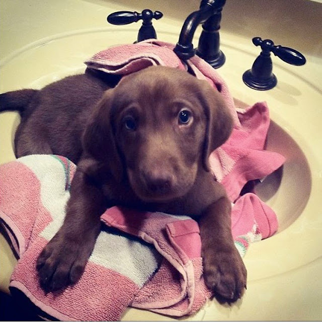 This cute puppy Elijah who is ready for his bath but thinks he needs a bigger sink next time