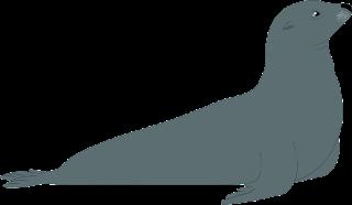 About Sea lions. सी लायन के बारेमे रोचक बातें।