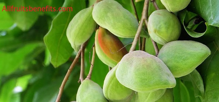 kakadu plum benefits for skin,kakadu plum health benefits,kakadu plum powder benefits,kakadu plum extract benefits,gubinge powder benefits