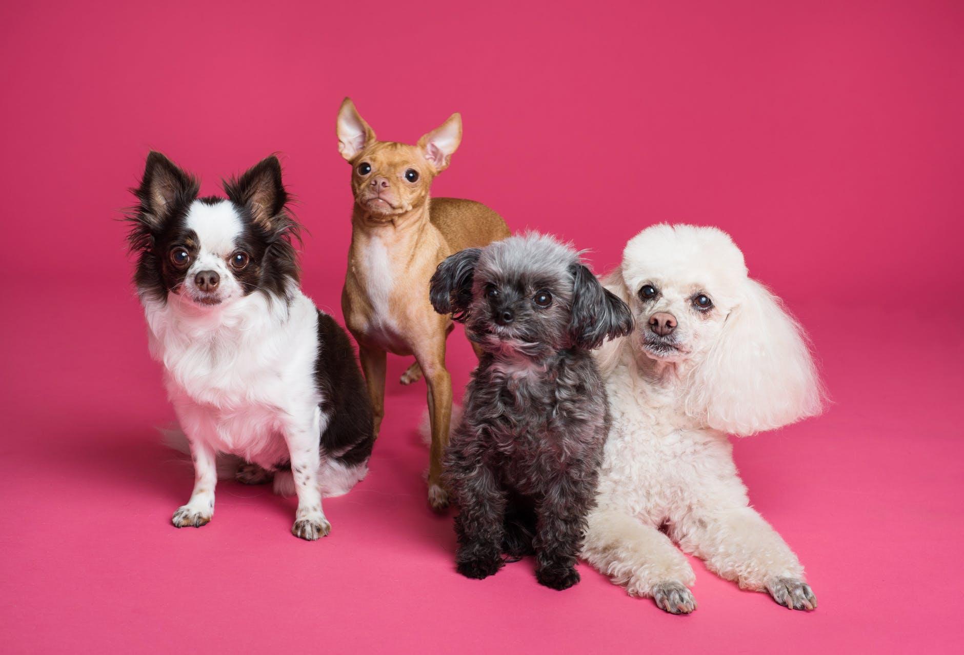 Développez les compétences sociales de votre chien