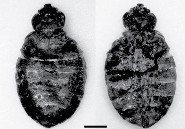 Remains of insects from bed bug genus found at oldest human habitation site in Oregon