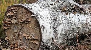ujuan perbaikan sifat kayu pada dasarnya dilakukan untuk memperpanjang umur penggunaan kayu sebagai bahan dasar bangunan atau untuk produksi lainnya.