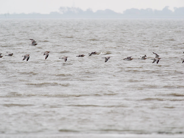 Brachvögel (420mm, f/5.6, 1/800sek, ISO320)